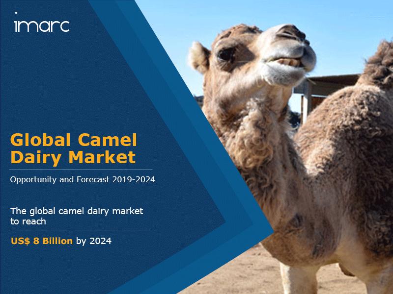 Camel Dairy Market Report