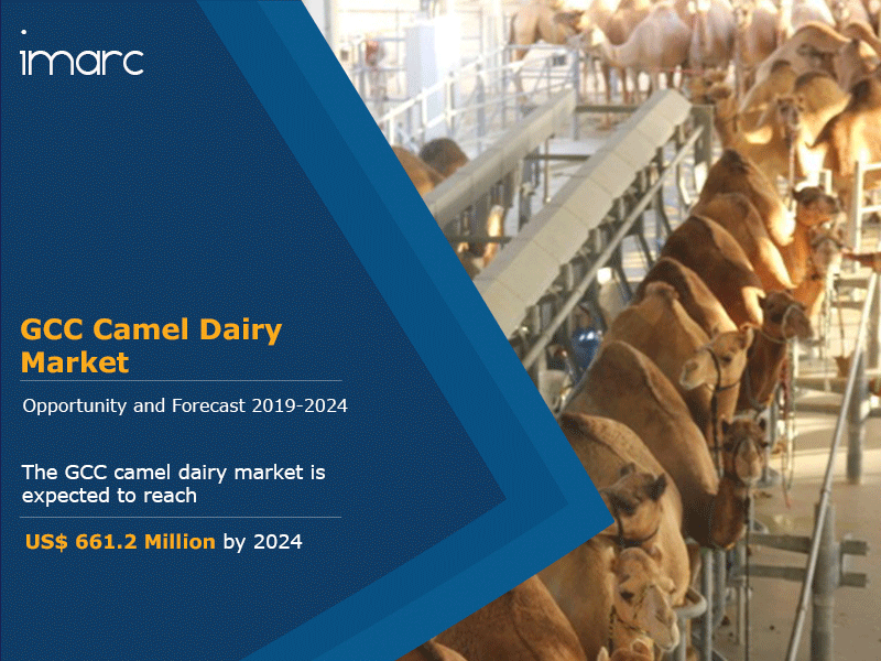 GCC Camel Dairy Market Research Report