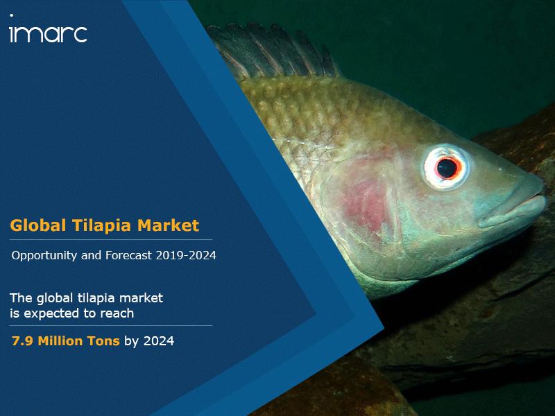 Global Tilapia Market Report