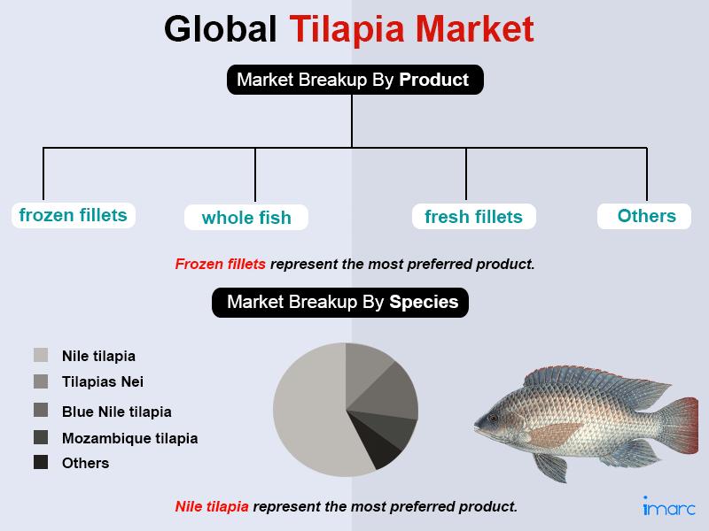 Global Tilapia Market Trends