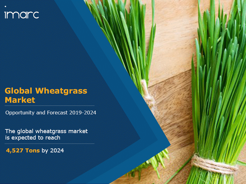 Wheatgrass Market Report